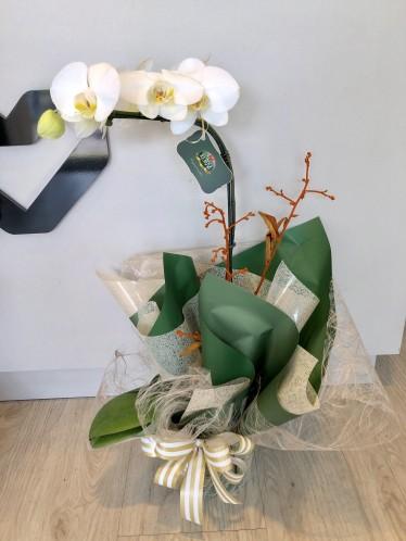 Orquídea Green