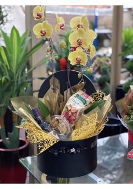 Box Orquídea Perfect gigante