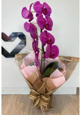 Orquidea espetacular