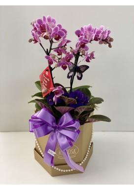 Orquídea mini na caixa Box