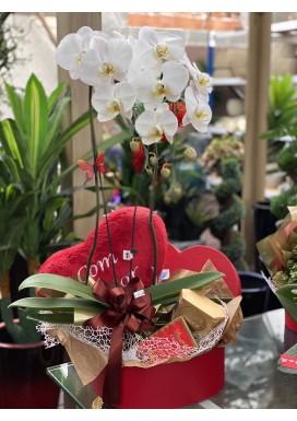Phalaenopsis Coração