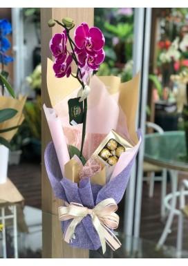 Orquídea + chocolate