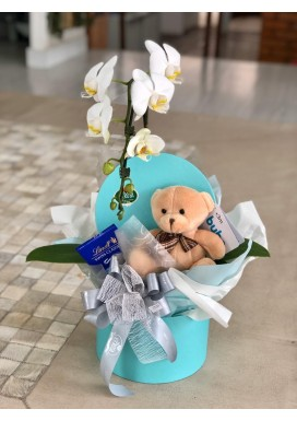 Orquídea Box Pelúcia