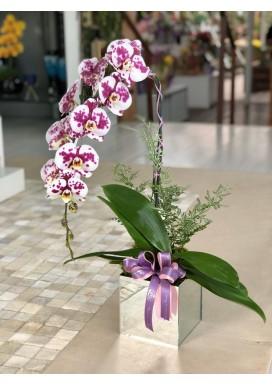 Orquídea Box Espelho