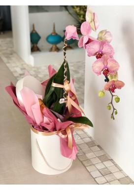 Orquídea + Prosecco