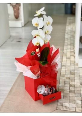 Orquídea Box Gaveta