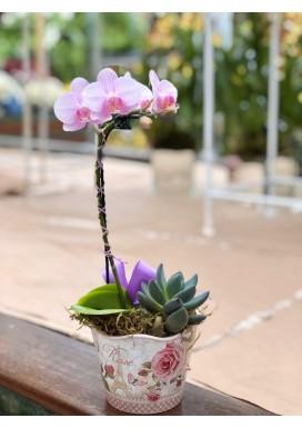Mini Orquídea + Suculenta