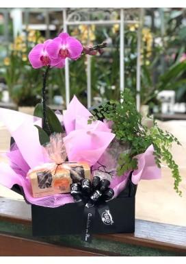 Cesta Orquídea Black