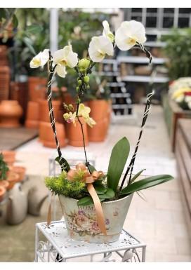 Orquídea Heart