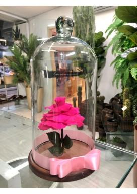 Rosa Eterna Pink