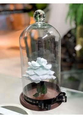 Rosa Eterna Branca