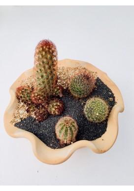 Mini Terrário Cactus