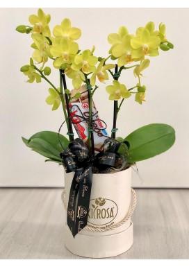 Box Mini Orquídea  amarela  + Chocolate