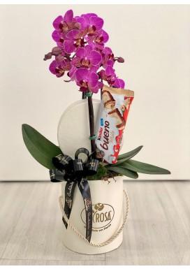 Mini Orquídea + Chocolate