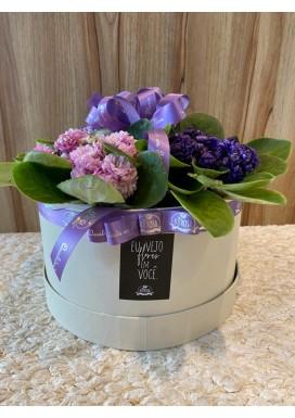 Box G Violetas