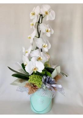 Box Orquídea