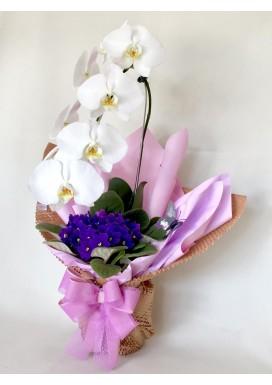 Orquídea + Violeta Dia Das Mães