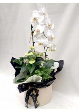 Box Orquídea + Plantas Dia das Mães